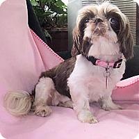 Adopt A Pet :: Gina - Mooy, AL