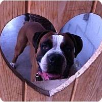 Adopt A Pet :: Bosco Bello - Scottsdale, AZ