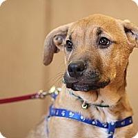 Adopt A Pet :: Mork - Surrey, BC