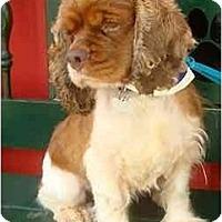 Adopt A Pet :: Quigley - Sugarland, TX