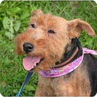 Adopt A Pet :: Brenna - Rigaud, QC