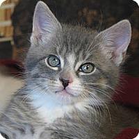 Adopt A Pet :: Angelos - Davis, CA