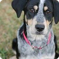 Adopt A Pet :: Lucille Ball - Austin, TX