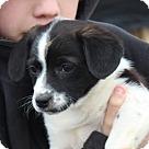 Adopt A Pet :: Dobson (I'm a Girl!! LRR)