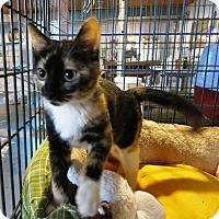 Adopt A Pet :: Keppy - Geneseo, IL