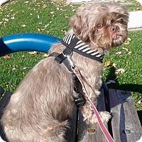 Adopt A Pet :: Tessa- - Mississauga, ON