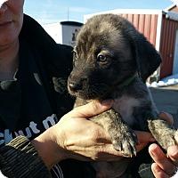 Adopt A Pet :: Shroeder - Ogden, UT