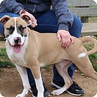 Adopt A Pet :: Xena - Elyria, OH