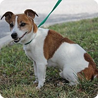 Adopt A Pet :: HARLEY - Terra Ceia, FL