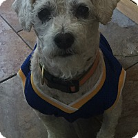 Adopt A Pet :: Louis - San Francisco, CA
