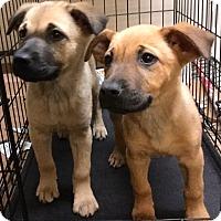 Adopt A Pet :: Franz - Phoenix, AZ