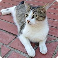 Adopt A Pet :: Biff - Agoura Hills, CA