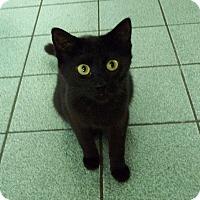 Adopt A Pet :: Thetis - Mississauga, Ontario, ON