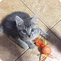 Adopt A Pet :: ZOE - Cypress, TX