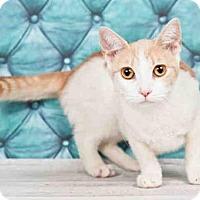 Adopt A Pet :: LOTUS - Orlando, FL