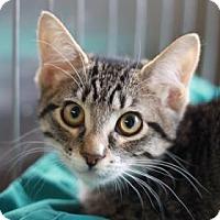 Adopt A Pet :: SACHA - Kyle, TX