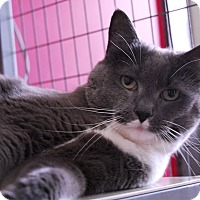 Adopt A Pet :: Smokey - Winchendon, MA