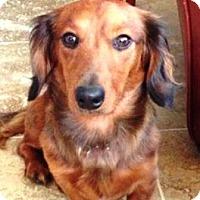 Adopt A Pet :: Zach - Denver, CO