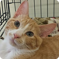 Adopt A Pet :: Akela - Colfax, IA