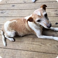 Adopt A Pet :: Trixie - Hixson, TN