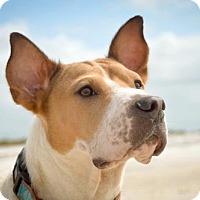 Adopt A Pet :: Charlie - Plant City, FL