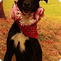 Adopt A Pet :: Mauve - Twin Falls, ID