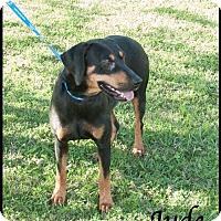 Doberman Pinscher/Hound (Unknown Type) Mix Dog for adoption in Ada, Oklahoma - Jude