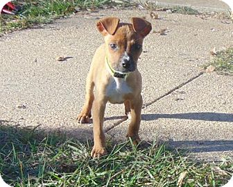 Shepherd (Unknown Type)/Hound (Unknown Type) Mix Puppy for adoption in Mobile, Alabama - Oliver