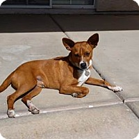 Adopt A Pet :: Rudy - Apache Junction, AZ