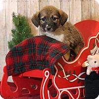 Adopt A Pet :: Morgan - Waldorf, MD