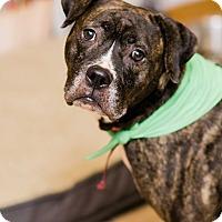 Adopt A Pet :: Carmen $125 - Seneca, SC