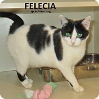 Adopt A Pet :: Felecia - Elizabeth City, NC