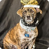 Adopt A Pet :: Casey - West Orange, NJ