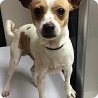 Adopt A Pet :: Brady - Palm Harbor, FL