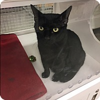 Adopt A Pet :: Tuna - Georgetown, DE