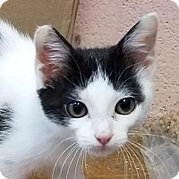Adopt A Pet :: Benson - Carencro, LA