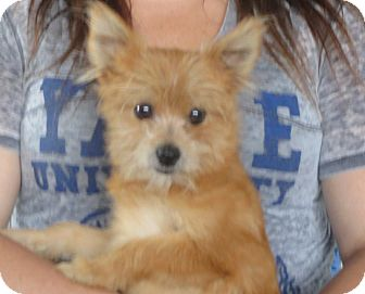 Image Result For Westport Connecticut Dogs And Puppies For Adoption From