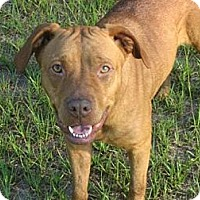 Adopt A Pet :: Jessie - Williston, FL