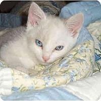 Adopt A Pet :: Clarence - Davis, CA