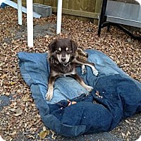 Adopt A Pet :: Sydney - Saskatoon, SK