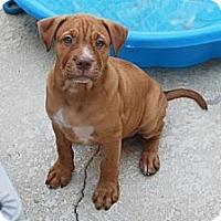 Adopt A Pet :: Brody - Minneola, FL