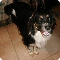 Adopt A Pet :: Lauren - Silsbee, TX