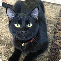 Adopt A Pet :: Eduardo - Plymouth, MN