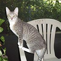 Adopt A Pet :: Sparkle - Fort Pierce, FL