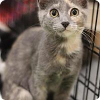 Adopt A Pet :: Bonnie - Sacramento, CA
