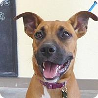 Adopt A Pet :: Franny - West Los Angeles, CA