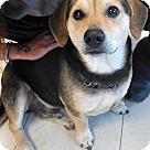 Adopt A Pet :: Pierce