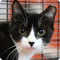 Adopt A Pet :: Amelie - Sarasota, FL