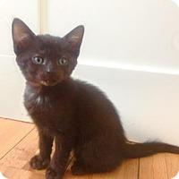 Adopt A Pet :: Holly - New York, NY