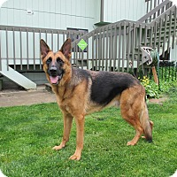 Adopt A Pet :: Jackson*ADOPTED* - Mill Creek, WA